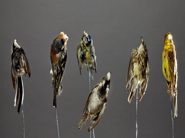 taxidermiste etude