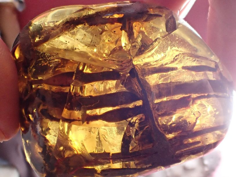 Natural History: An amber specimen containing the remains of a cretaceous plant …