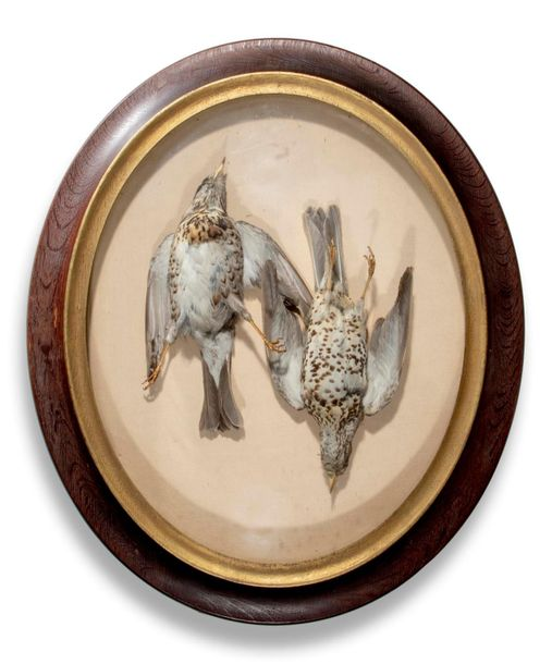 Taxidermy: A set of four Ledot of Paris wall cases French, late 19th century com…