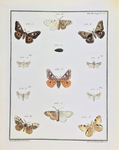 European butterflies, engraved and colored. ENGRAMELLE – ERNST. Papillons d'Euro…