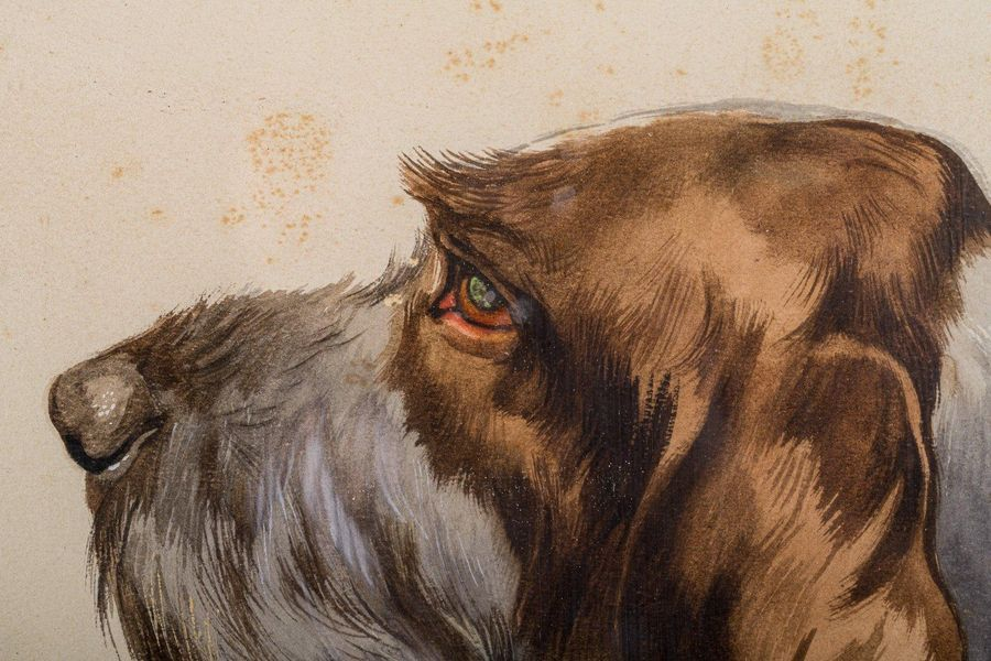 Mario Norfini ( 1870 1956) Dog headfirst half of the 20th centurywatercolor on p…