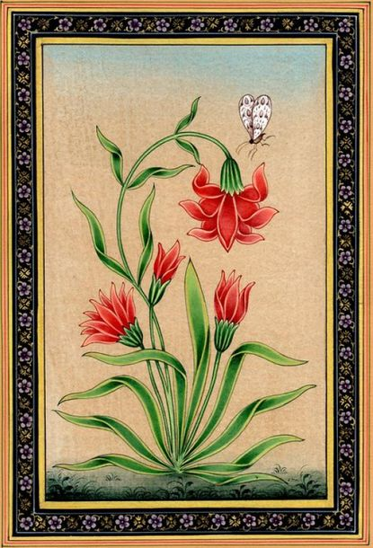 Mughal Flower with Butterfly Poppy or mainly the 'opium' poppy was a famous plan…