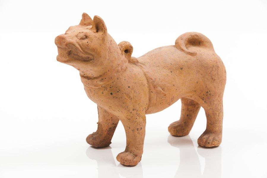 Dog Terracotta sculpture depicting a harnessed dog  Sichuan Province  Han Dynast…