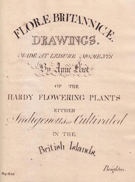 Anne Eliot née Heywood (1791-1857) (Ecole anglaise): « Florae Britannicae. Drawings,…