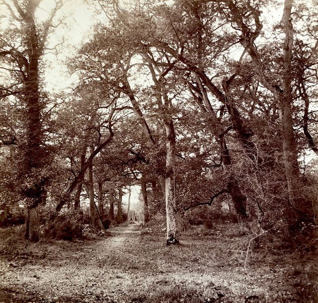 William Drooke Harrison Forêt de Fontainebleau, c. 1865. Impasse près du carrefour…